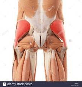 tendinitis del gluteo medio
